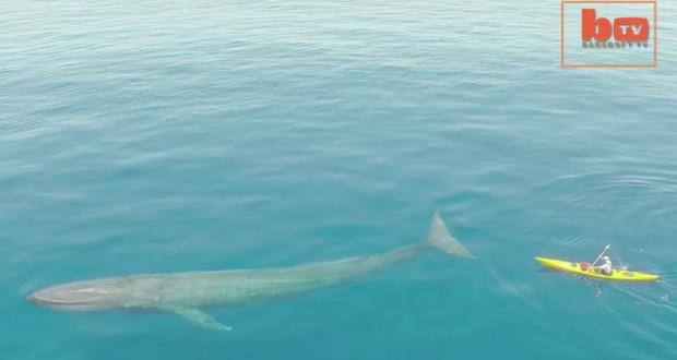drone-blue-whale-kayak