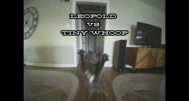 drone-vs-cat