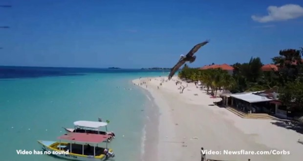 pelican-drone-crash-jamaica