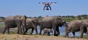 wildlife drones